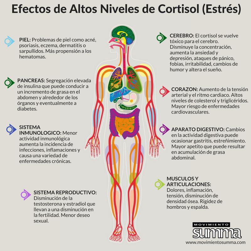 Efectos cortisol alto