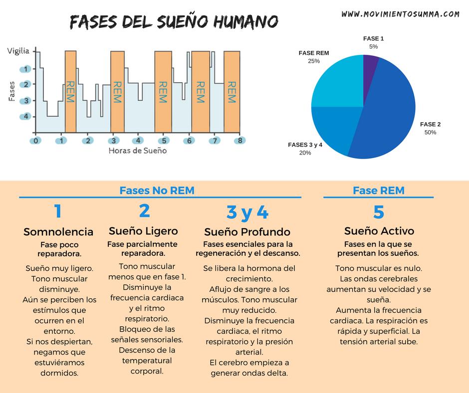 fases del sueño humano