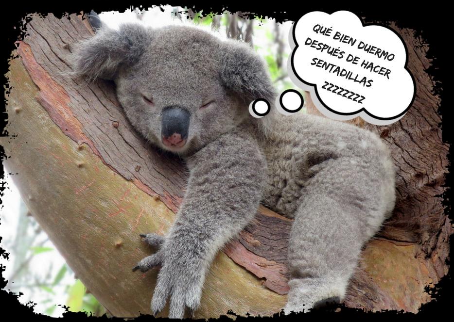 sueño, dormir y ejercicio fisico