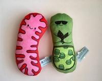 mitocrondria y HIIT