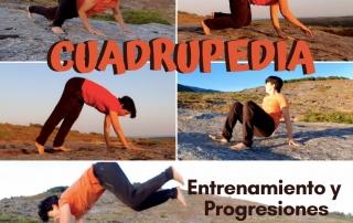cuadrupedia entrenamiento y progresiones